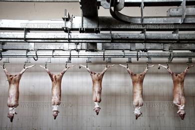 Tommaso_ausili_slaughterhouse091_2